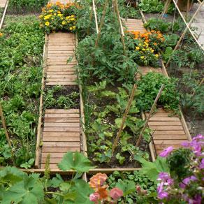 """""""Naturación y Agricultura Urbanas"""""""